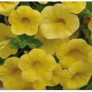 Калибрахоа Calita Deep Yellow