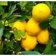 Лимон Сладкий Пунш Sweet Punch