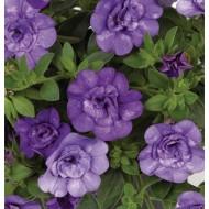 Калибрахоа Double Lavender