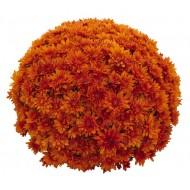 Хризантема Goal Orange мультифлора шаровидная ранняя