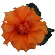 Гибискус Hibiscus Laluna